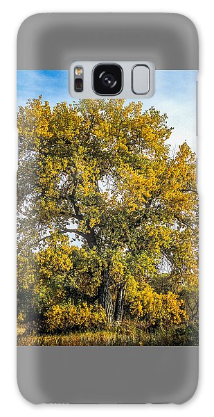 Cottonwood Tree # 12 In Fall Colors In Colorado Galaxy Case