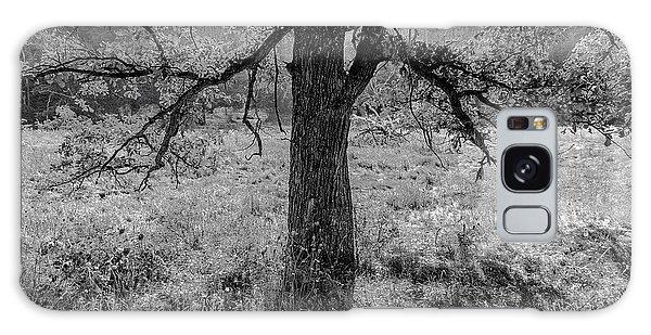 Coulee Oak Galaxy Case