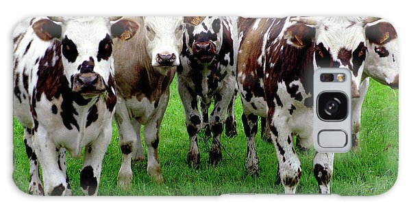 Galaxy Case featuring the photograph Cow Group by Frank DiMarco