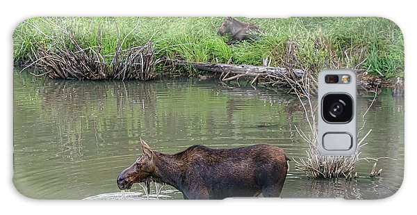 Galaxy Case featuring the photograph Cow Moose And Calf by James BO Insogna