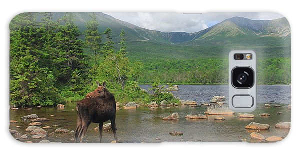 Cow Moose Looking Back At Sandy Stream Pond Galaxy Case by John Burk