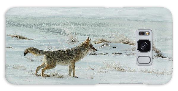 Coyote - 8962 Galaxy Case