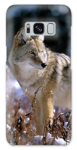 Coyote In Winter Light Galaxy Case