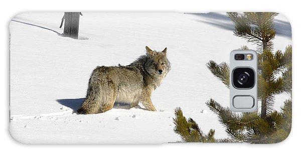 Coyote In Winter Galaxy Case
