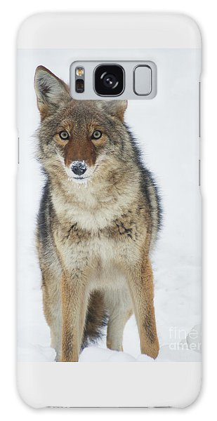 Coyote Looking At Me Galaxy Case