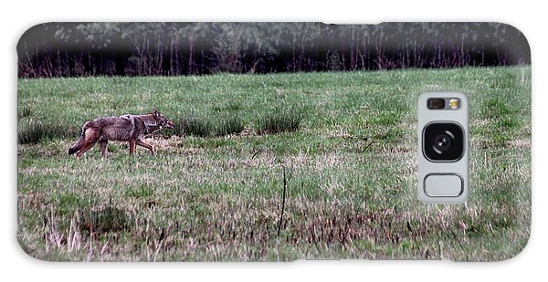 Coyote On The Prowl Galaxy Case by Bruce Patrick Smith