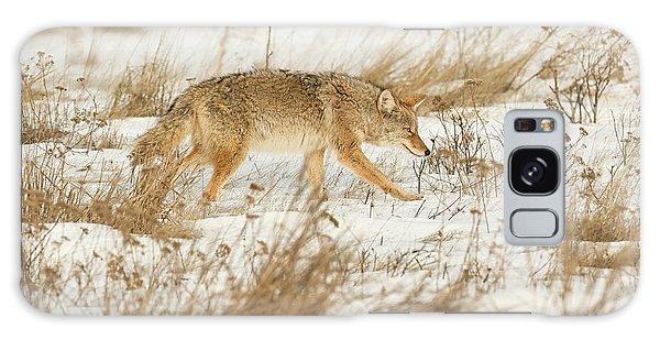 Coyote Stalk Galaxy Case