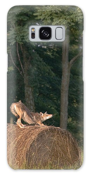 Coyote Stretching On Hay Bale Galaxy Case