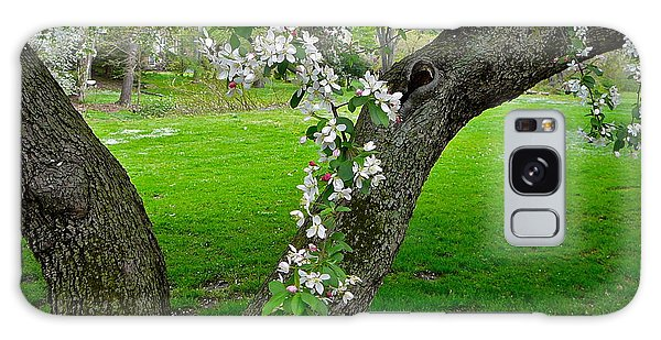 Crabapple Blossoms On A Rainy Spring Day Galaxy Case
