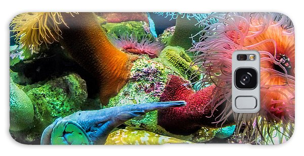 Creatures Of The Aquarium Galaxy Case