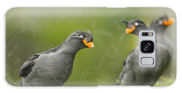 Crested Auklets Galaxy Case