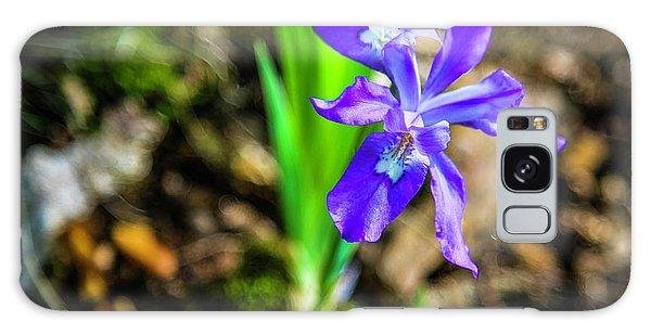 Crested Dwarf Iris Galaxy Case