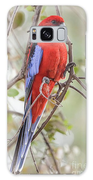 Crimson Rosella 01 Galaxy Case