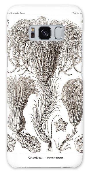 Sea Lily Galaxy Case - Crinoids by Ernst Haeckel