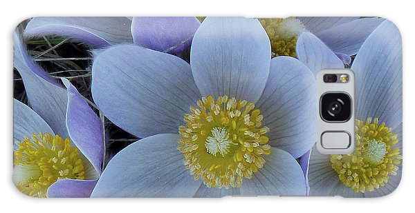 Crocus Blossoms Galaxy Case