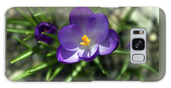Crocus In Bloom #1 Galaxy Case by Jeff Severson