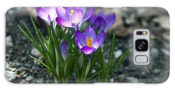Crocus In Bloom #2 Galaxy Case by Jeff Severson