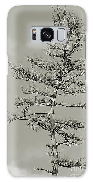 Crooked Tree Galaxy Case
