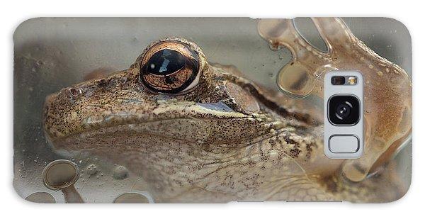 Cuban Treefrog Galaxy Case