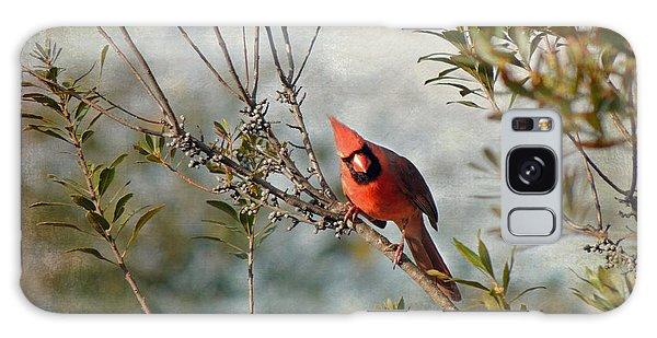 Curious Cardinal Galaxy Case