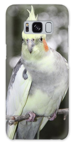 Curious Cockatiel Galaxy Case by Inspirational Photo Creations Audrey Woods