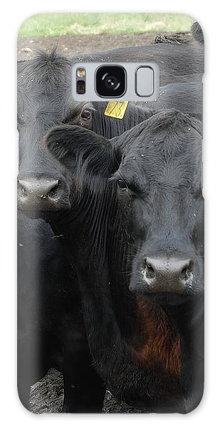 Curious Cows Galaxy Case