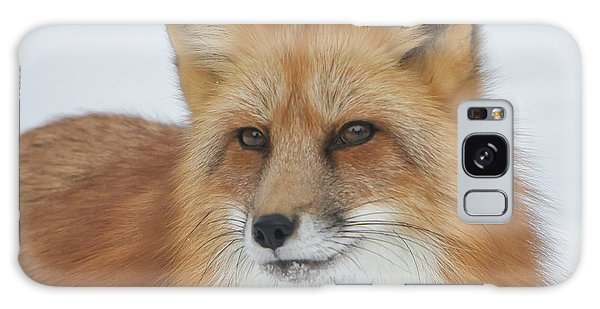 Curious Fox Galaxy Case by Jack Bell