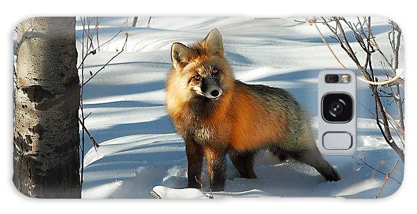 Curious Fox Galaxy Case