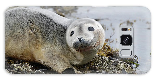 Curious Harbor Seal Pup Galaxy Case