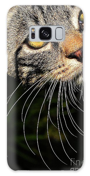 Curious Kitten Galaxy Case