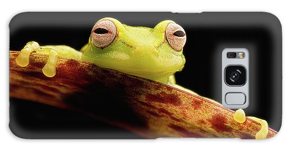 Curious Little Amazonian Tree Frog Galaxy Case
