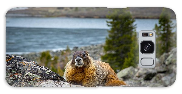 Curious Marmot Galaxy Case by Michael J Bauer