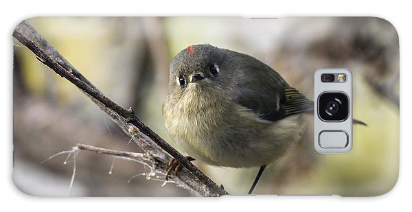 Curious Ruby-crowned Kinglet Galaxy Case
