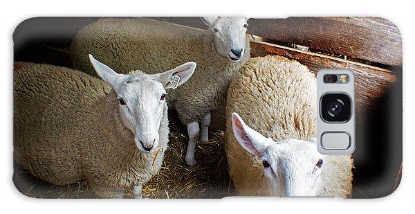 Curious Sheep Galaxy Case