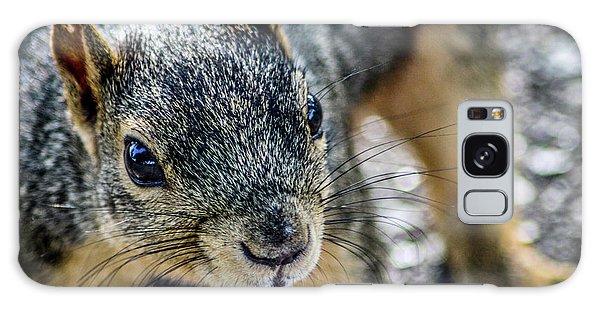 Curious Squirrel Galaxy Case