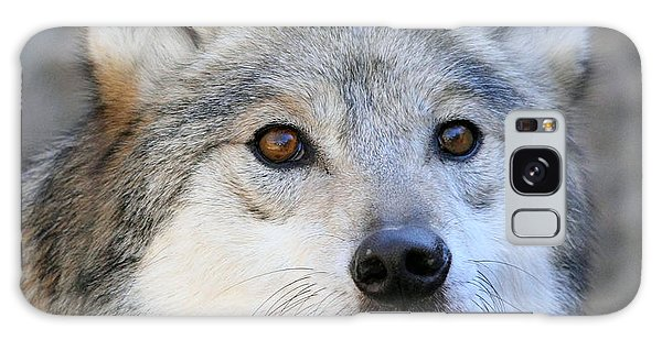 Curious Wolf Galaxy Case