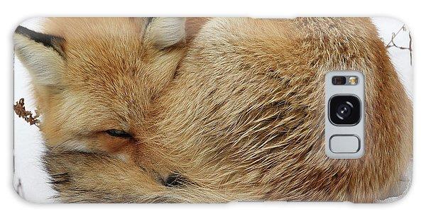 Curled Up Fox Galaxy Case