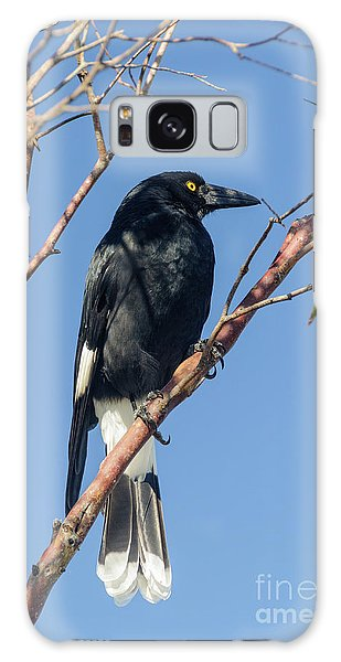 Currawong Galaxy Case by Werner Padarin