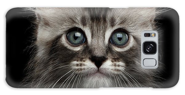 Cute American Curl Kitten With Twisted Ears Isolated Black Background Galaxy Case