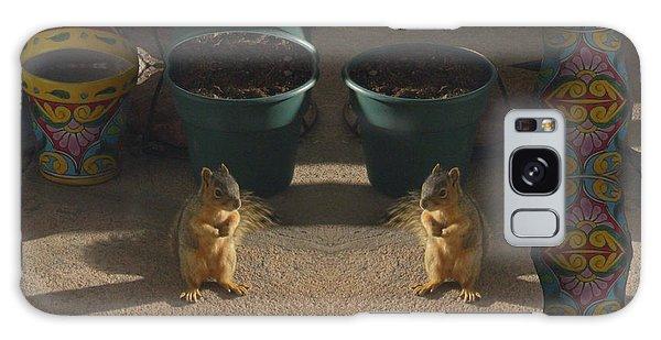 Cute Baby Squirrels On The Porch Galaxy Case