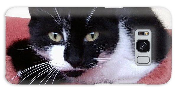 Cute Cat Galaxy Case