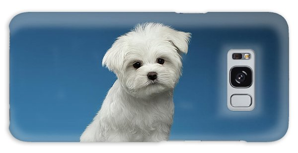 Cute Pure White Maltese Puppy Standing And Curiously Looking In Camera Isolated On Blue Background Galaxy Case by Sergey Taran