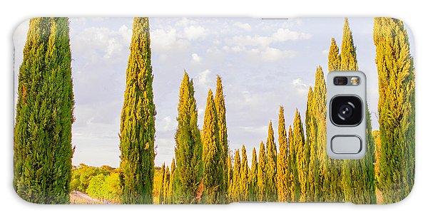 Tree Galaxy Case - Cypress Trees In Tuscany by Ariane Moshayedi