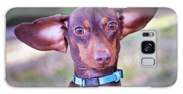 Dachshund Ears Up Galaxy Case