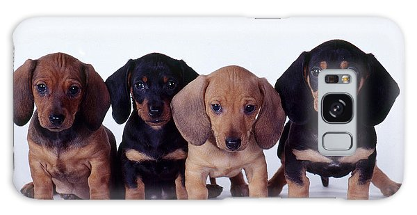 Dachshund Puppies  Galaxy Case by Carolyn McKeone and Photo Researchers