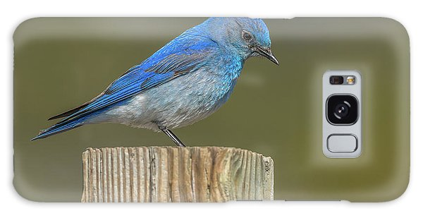 Daddy Bluebird Guarding Nest Galaxy Case