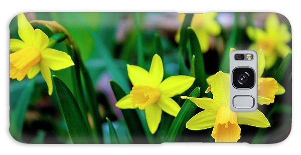 Daffodils A Symbol Of Spring Galaxy Case