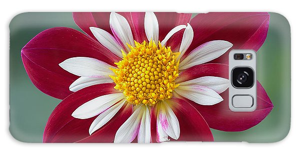 Dahlia 'apopa Cindy' Galaxy Case