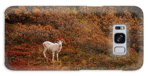 Dall Sheep Denali National Park Galaxy Case