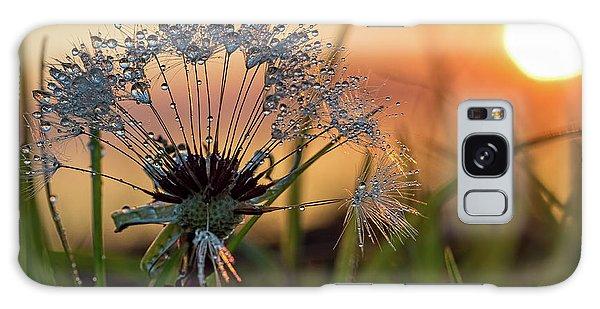 Dandelion Sunset 2 Galaxy Case